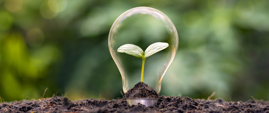 Energy efficient lightbulb in dirt with a sprouting plant growing at the center.