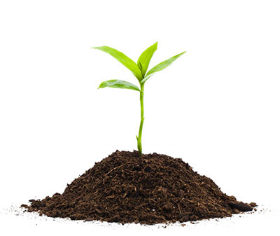 Green sprout in dirt
