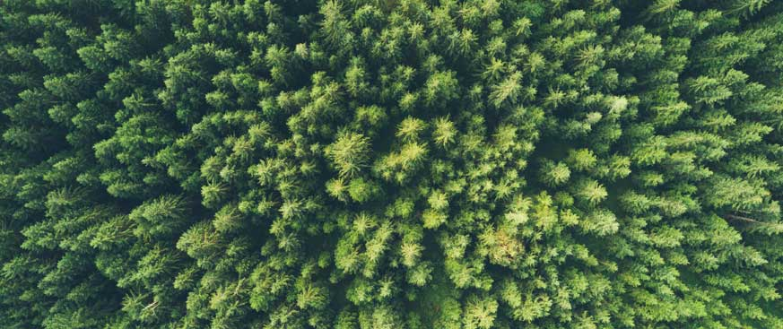 ESG featured image of a top-down view of a green forest
