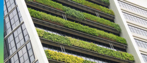 Plants growing on high rise terraces